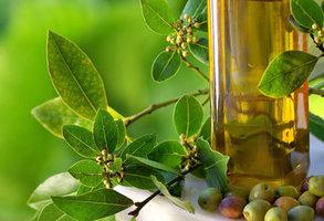 Uleiul de masline extravirgin Monini, elixir de sanatate